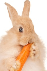 Cute rabbit_4818(48).jpg