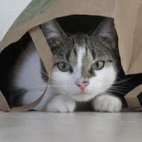 chat-sac